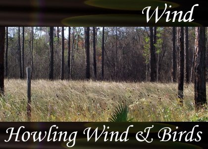 SoundScenes - Atmo-Wind - Howling Wind and Birds