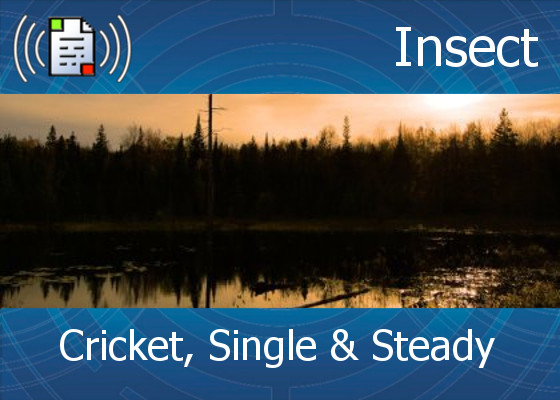 km-atmo-insect – cricket, single and steady