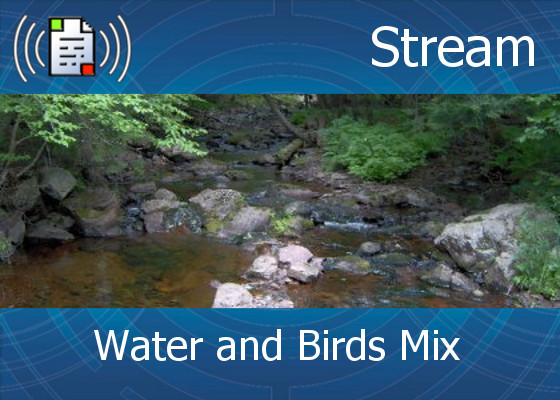 km-atmo-stream – water and birds mix