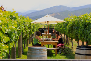 Wine tasting among the vines at Saint Clair, wine tours with Sounds Connection