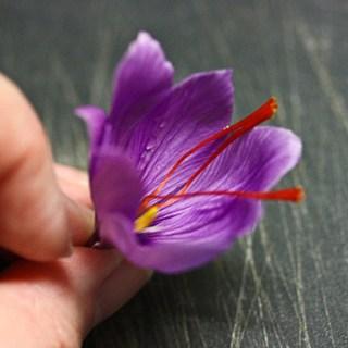 Saffron 3