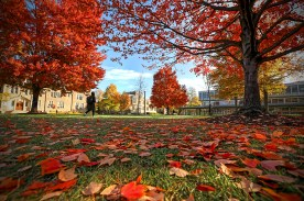 fall leaves on campus