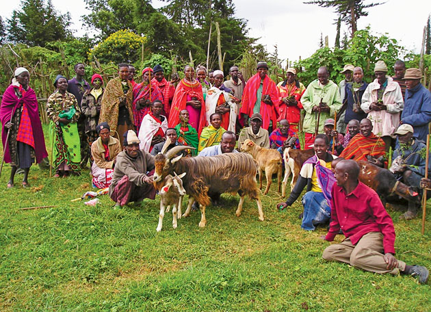 """The Samburu are called """"Loibor Nkineji,"""" the """"Owners of White Goats,"""" but many have grown so poor that they do not own even one goat. Associate Professor Lesorogol, through the Center for New Institutional Social Sciences, has begun to introduce Toggenburg goats to this community. These highly productive Swiss goats hold the promise of better nutrition and a better way of life. (Courtesy photo)"""