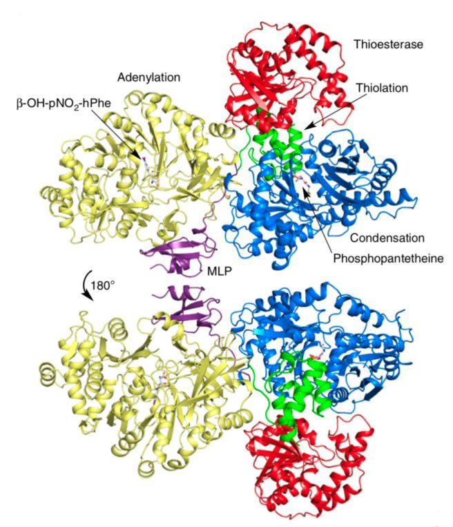 First pictures of enzyme that drives new class of antibiotics
