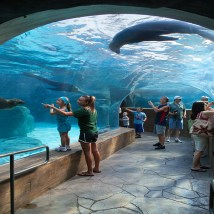 The St. Louis Zoo's Judy and Jerry Kent Sea Lion Sound is among PGAV's other St. Louis design work.