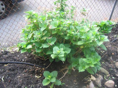 2007-0602-GardenTour - 02