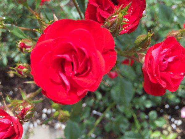 lj060515botanical68