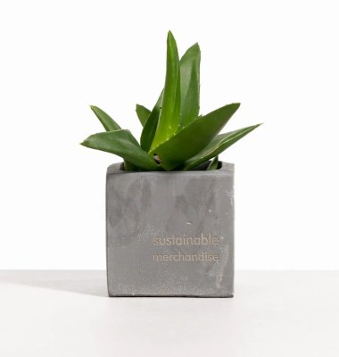 Sustainable Employee Gift Ideas – Clay Pot Garden
