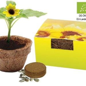 Small Coco Planting Pot Sun