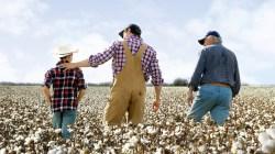 COTTON USA cotton farm