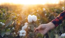 Ralph Lauren Makes Play for Regenerative American-Grown Cotton