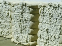 Cotton Falls below Sixty Cents in November