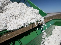 China Adjusts its Cotton Policy and Pricing