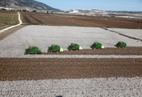 Cotton Prices: The Year in Review and a Look Ahead
