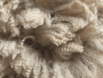 USAFC Forms to Boost U.S. Alpaca Fiber Production, Manufacturing
