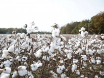 Oritain Introduces 'Fingerprint' ID Technology for Cotton Testing