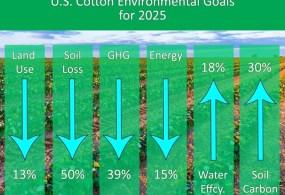 Sustainability Gets Greater Focus From US Cotton Industry