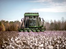 Pakistan University Invents Disease-Resistant GM Cotton