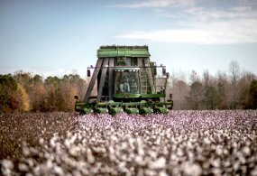 Global Cotton Output Seen Rising Amid Demand Fluctuation and Weather Woes
