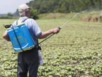 PAN UK Report Cites Uneven Progress in Pesticide Use in Cotton Farming