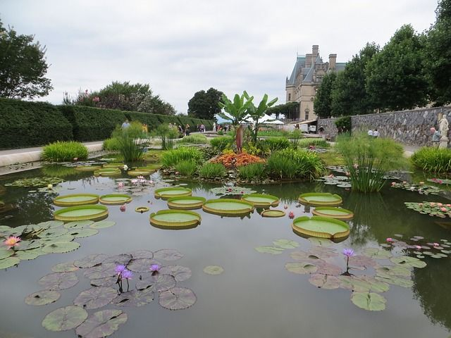 Large pond with lily pads at the Biltmore estate gardens with the Biltmore house in background