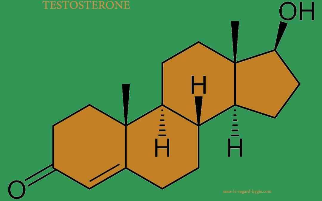 La testostérone dans notre quotidien