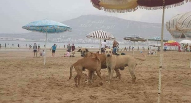 أكادير  يخسر اللواء الأزرق وشواطئ أكلو ومير اللفت وإفني تحافظ عليه