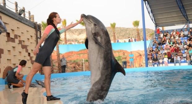 """افتتاح الفضاء الترفيهي""""عالم الدلافين""""بمدينة أكَادير …أول مشروع ترفيهي سياحي من نوعه بالمغرب وإفريقيا."""