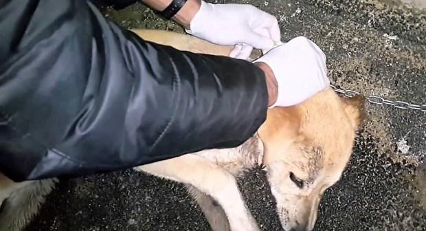 """عراك دام بسبب كلب """" ضربني أنا و متقيسش الكلب شاريه ب25 ألف ريال"""""""