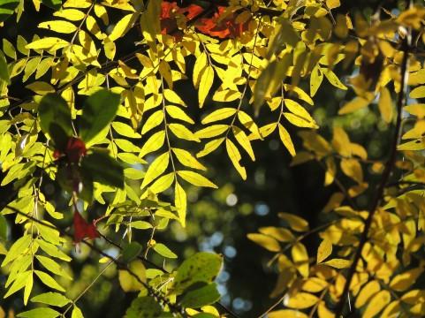 初秋の木の葉