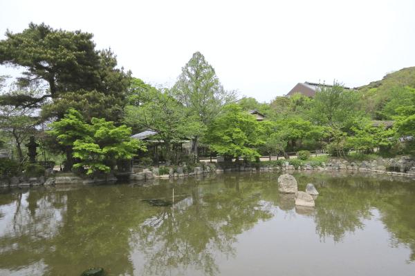 円山公園の池
