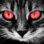 冬の眼の充血と対策