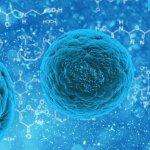 長文「新型コロナウイルス感染症対策専門家会議の見解」の要約