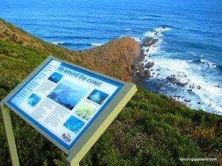 Cape-Liptrap-Coastal-Park (4)