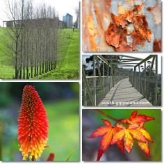 Leongatha-farmland-flowers-rail-trail
