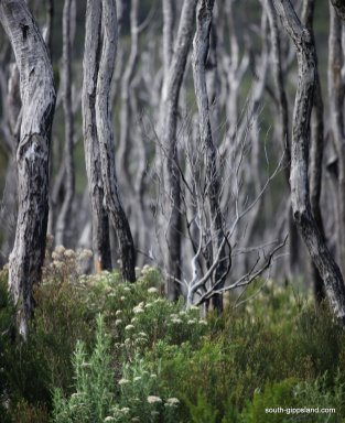 NormanBay-WilsonsProm-trees