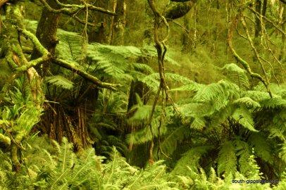 Turtons-Creek-Reserve (2)