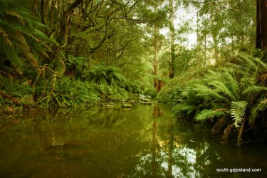 Turtons-Creek-Reserve (8)