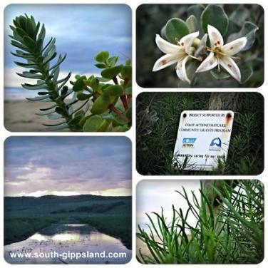 native and coastal plants at Waratah Bay near Wilsons Promontory