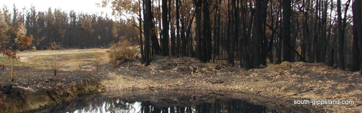 bush fire landscape