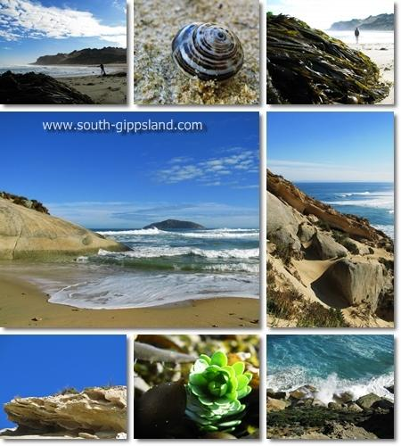 Collage of photographs taken at Darby Beach at Wilsons Promontory National Park