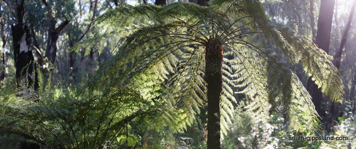 lilly-pilly-gully (27)