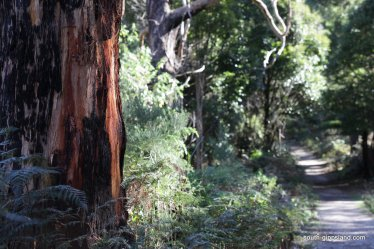 lilly-pilly-gully (6)