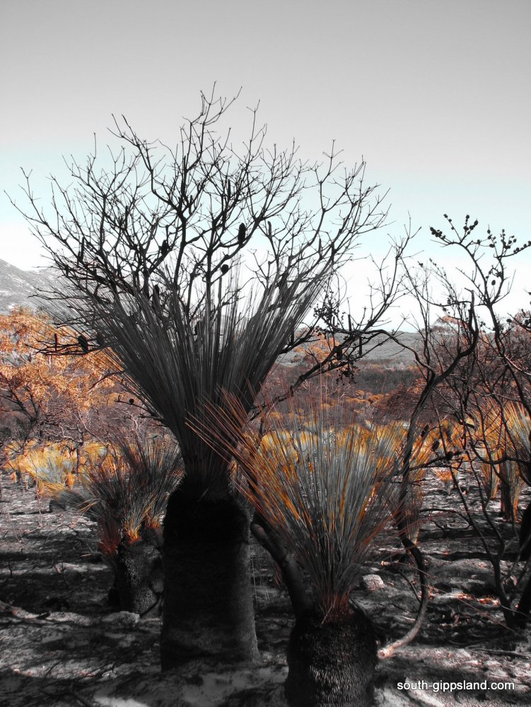lilly-pilly-gully-fire-damage (11)