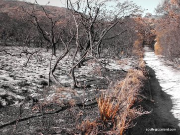 lilly-pilly-gully-fire-damage (19)