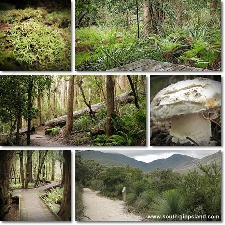 Collage of photographs taken along the Lilly Pilly Gully Nature Walk at Wilsons Promontory National Park, including fungi, moss, ferns and other native vegetation.
