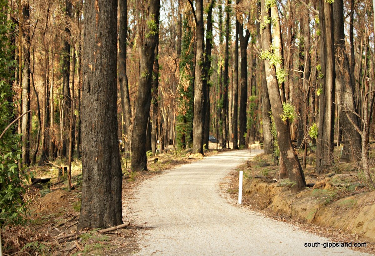 road in the forest after a bushfire at Mirboo North