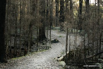 lyrebird-walk-mirboo-north (30)