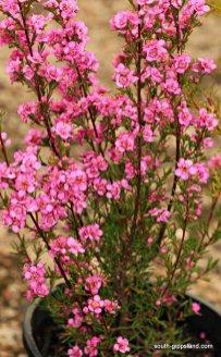 narkabundah-native-plant-nursery (25)