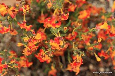 narkabundah-native-plant-nursery (29)